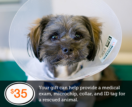 Your gift can help provide a medical exam, microchip, collar, and ID tag for a rescued animal.